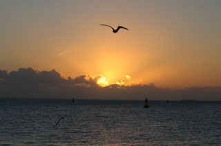 Sunset Flight, Key West, Florida.