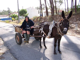 Woman on cart pulled by donkey - Quirios, Portugal