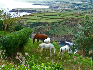 Inlets, grazing land - typical Azorean coastal view.